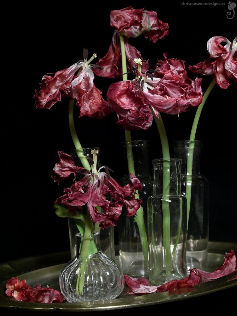 Faded tulips in glass vases. | Verwelkte Tulpen in Glasvasen.
