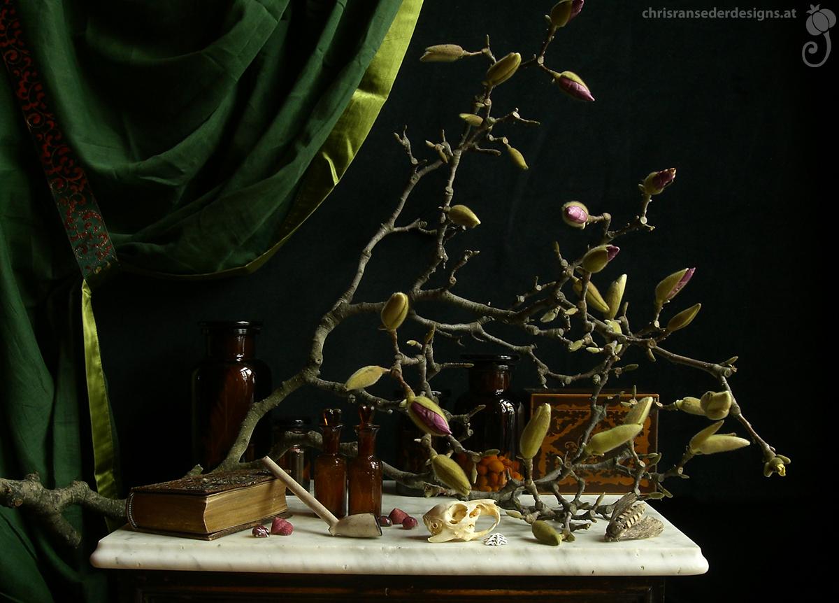 Magnolia branch, bottles, a book, a butterfly and the skull of a rodent. | Magnolienzweig, Flaschen, Buch, Schmetterling und der Schädel eines Nagers.