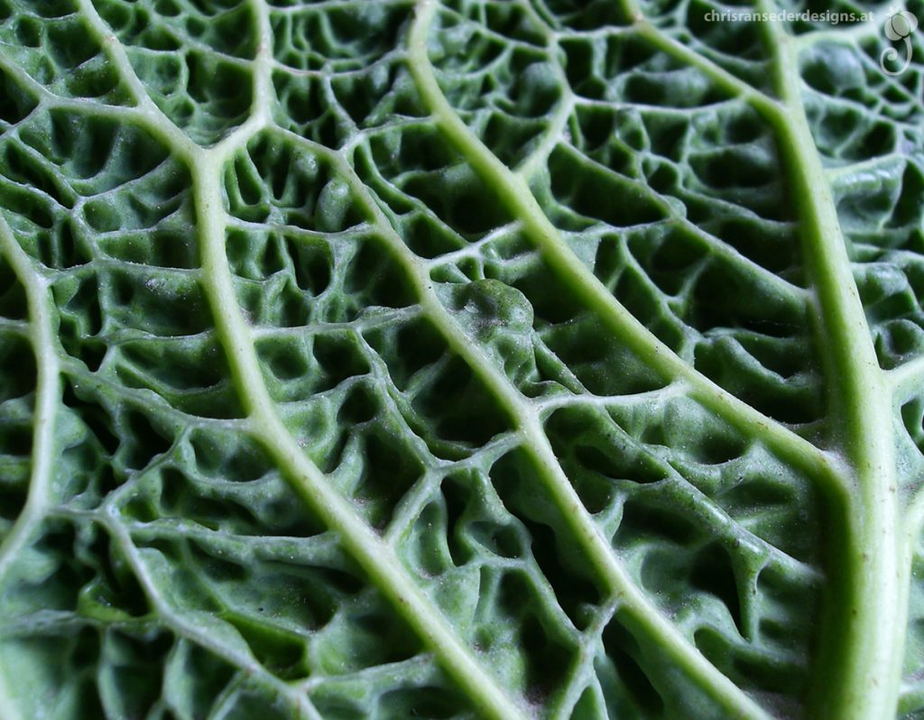 Detail of a cabbage. | Detail eines Kohls.