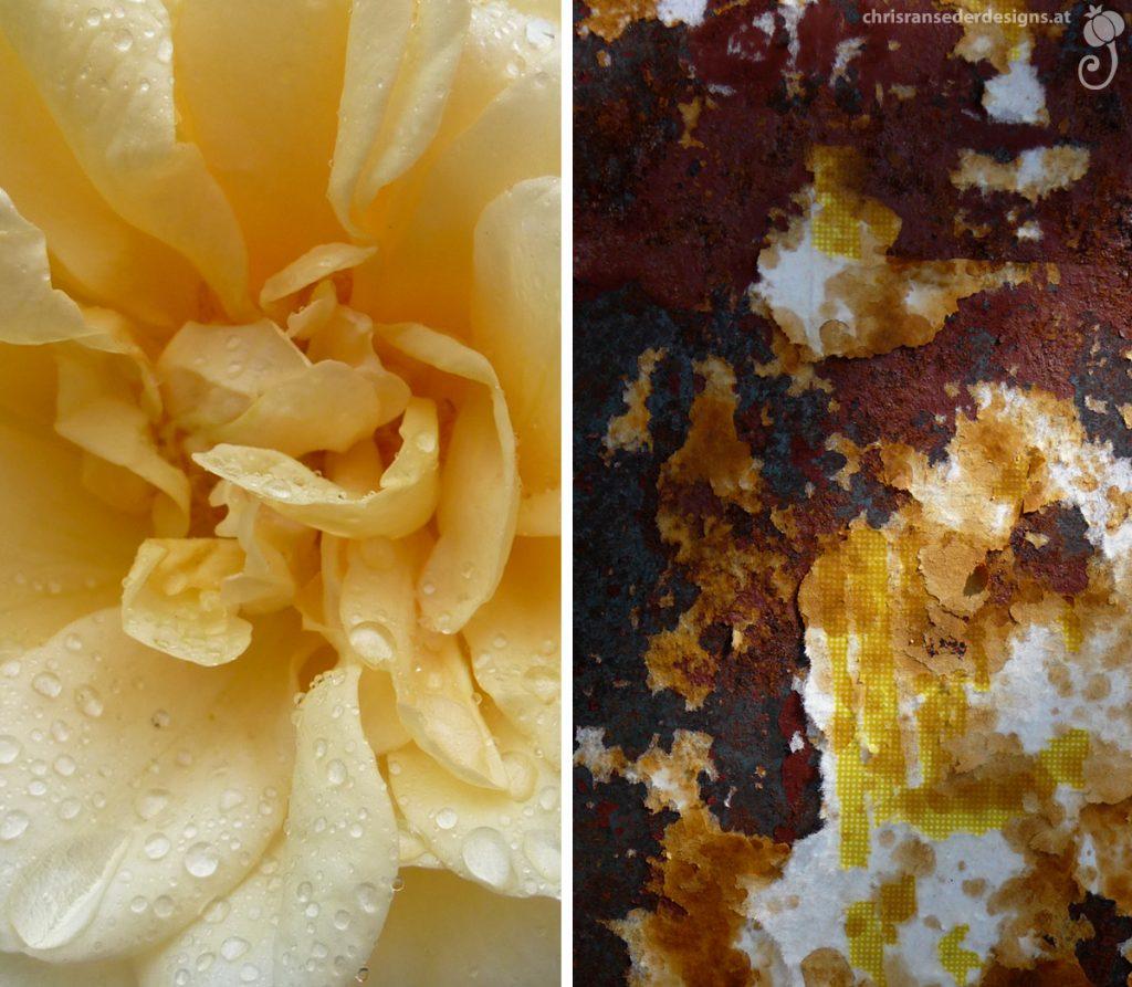Petals of a rose. Rust and peeling paper. | Blütenblätter einer Rose. Rost und abblätterndes Papier.