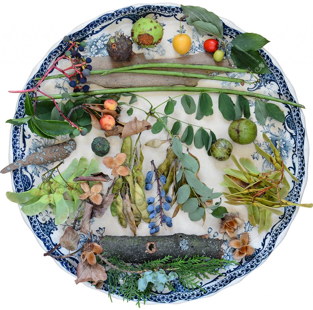 Large plate with pieces of bark, seeds and leaves. | Großer Teller mit Rindenstücken, Samen und Blättern.
