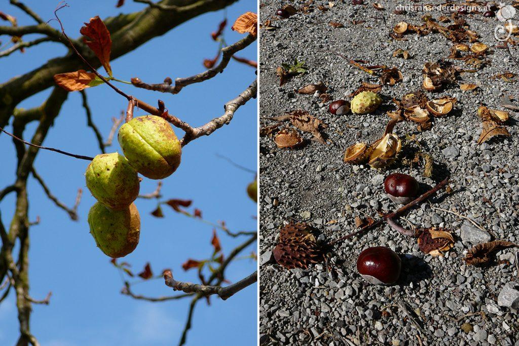 Horse chestnut bearing fruit. Fallen concers. | Rosskastanienbaum mit Früchten. Herabgefallene Rosskastanien.