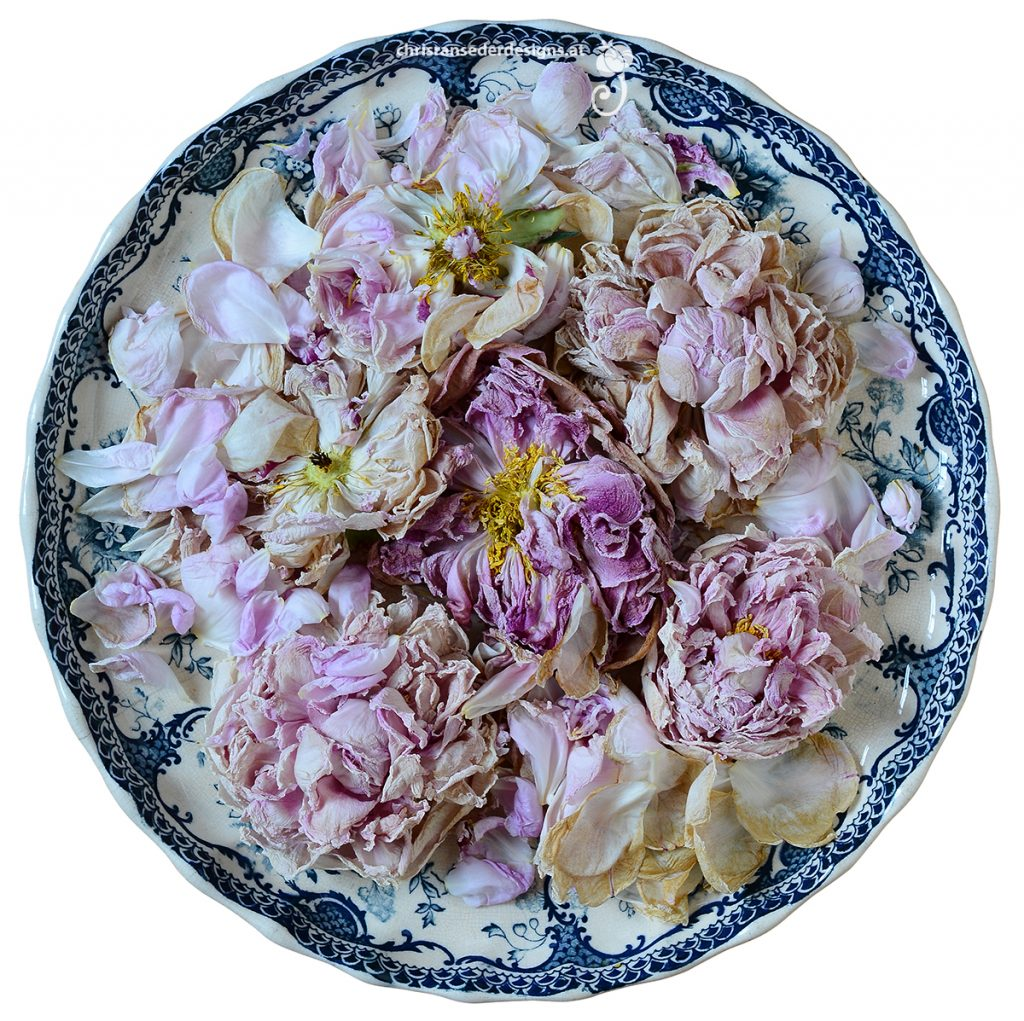 Plate with wilted Peonies. | Teller mit verwelkten Päonien.
