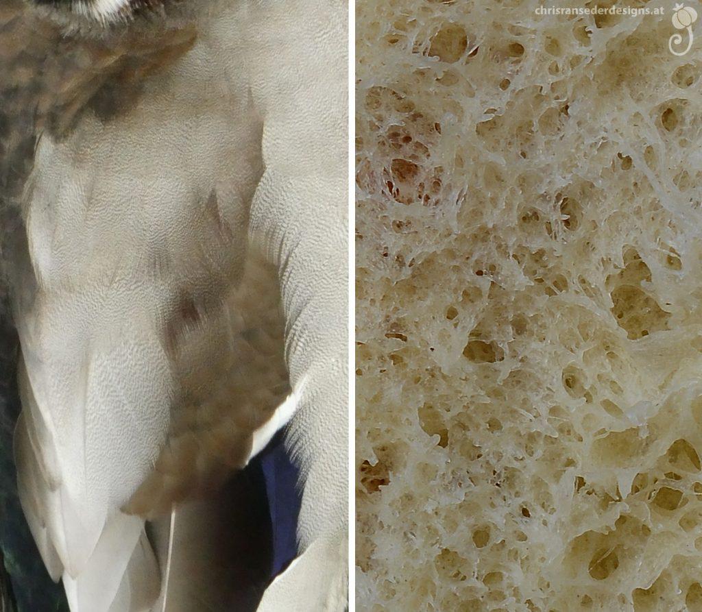 White and grey speckled feathers. Spongy interior of a bun. | Weiß-grau gesprenkelte Federn. Schwammiges Inneres eines Brötchens.