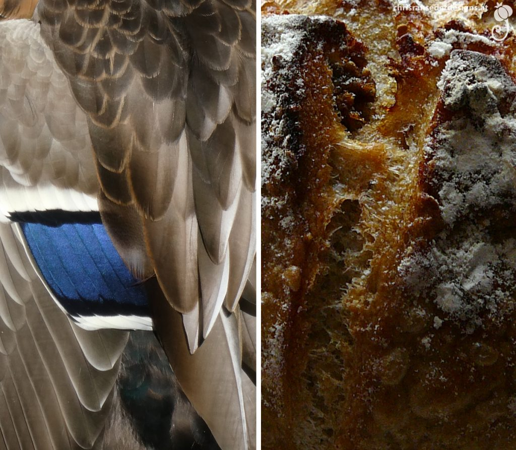 Wing with a bar of bright blue feathers. Peaks and split crust of a loaf of bread. | Flügel mit Streifen aus strahlend blauen Federn. Gipfelchen und aufgeplatzte Kruste eines Brotlaibes.