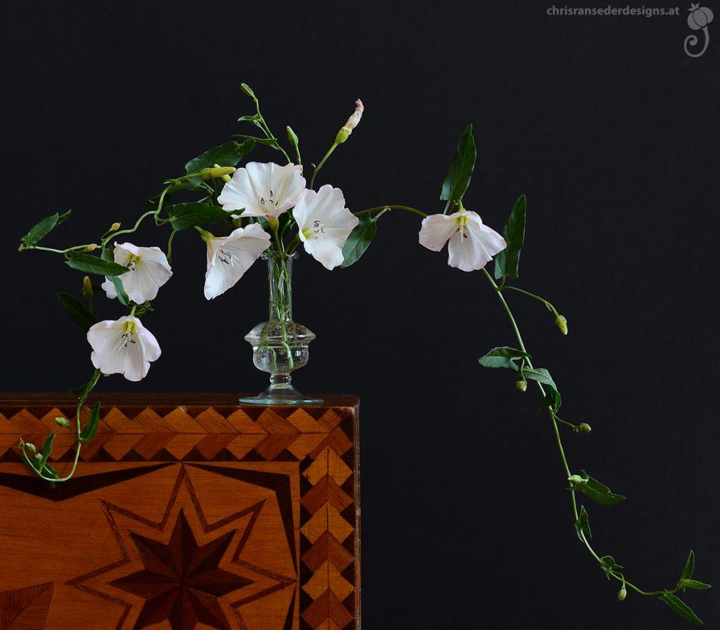 Two sprigs of bindweed in a tiny glass bottle placed on a wooden box with intarsia.| Zwei Ranken der Ackerwinde in einem Glasfläschchen, das auf einer Holzschachte mit Einlegearbeit steht.